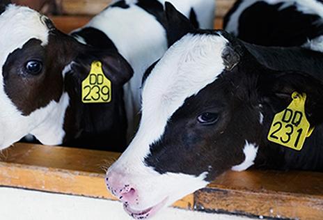 智慧畜牧养殖方案